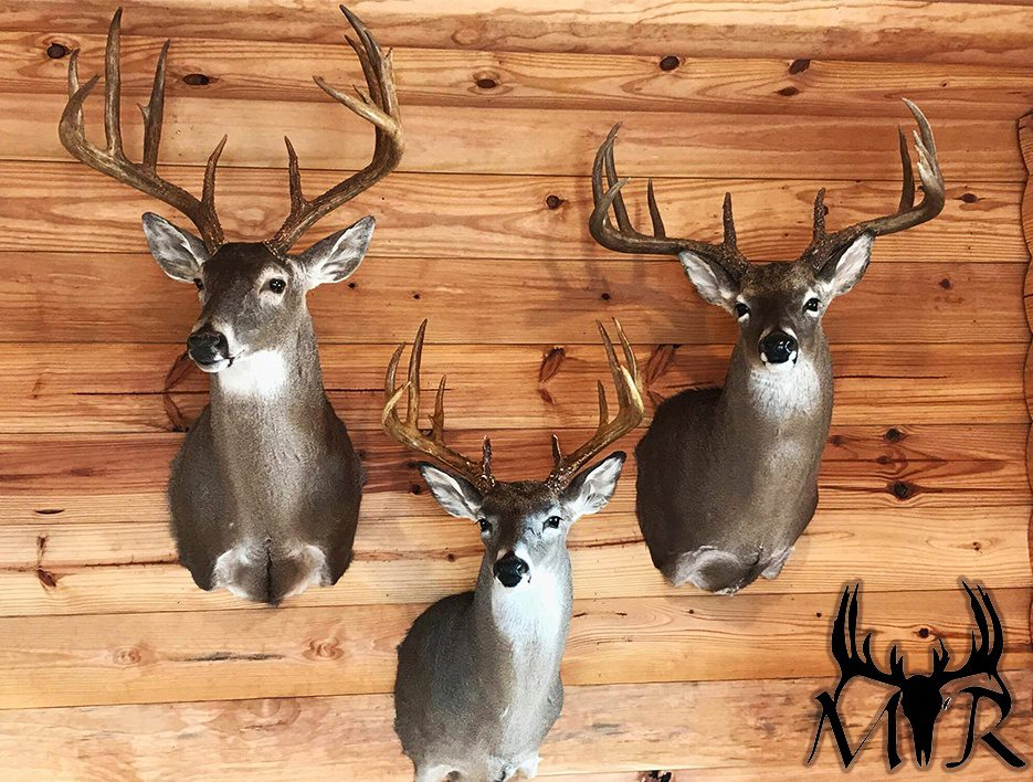 Use deer hunting scents to land a buck like the Three Trophy Buck Mounts in the lodge shown here